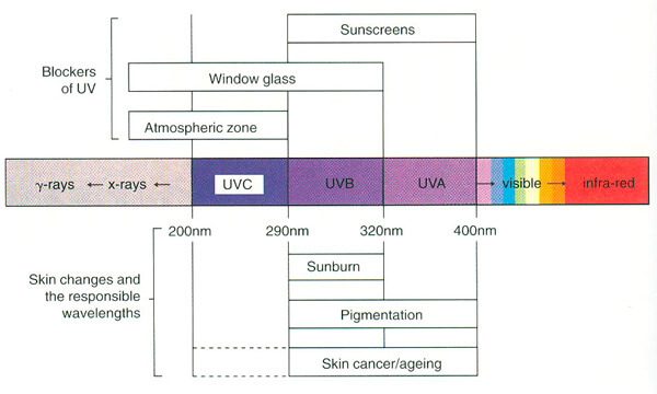 Ultraviolet Rays and Suncreens